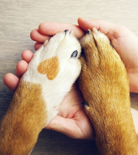 benessere-animale