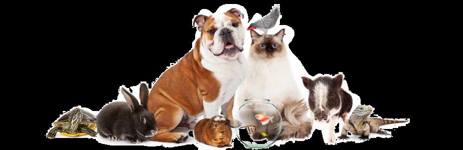 vet-trastevere-animali-domestici-contatti